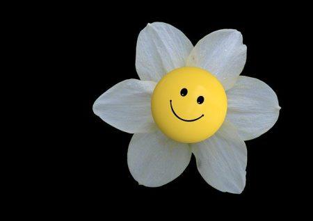 blossom-232914_640